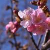 春の訪れとともにDAHON Presto SLが欲しくなる